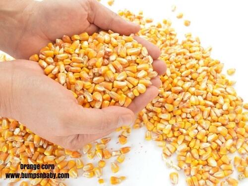 home made cerelac orange corn