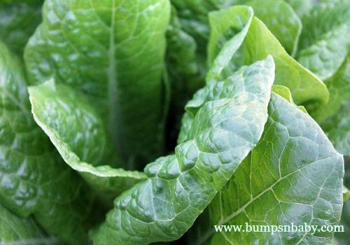 iron rich spinach