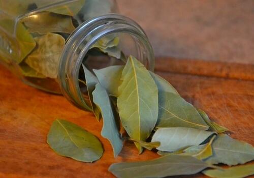 bay-leaf-chest-compress