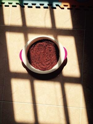 homemade sprouted ragi flour