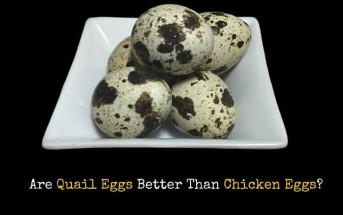 quail eggs over chicken eggs